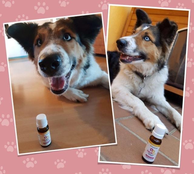 Calmexin Test Hund