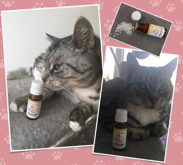 Calmexin Bachblüten Test Katze