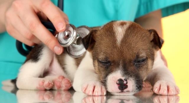 Durchfall Hund Tierarzt