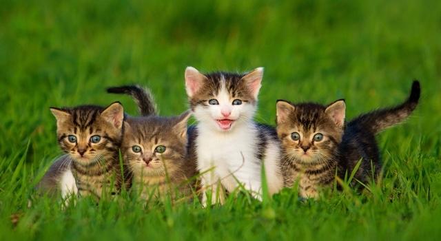 Furminator für Katzen