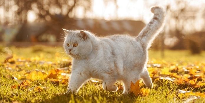 Wie alt werden Katzen als Freigänger