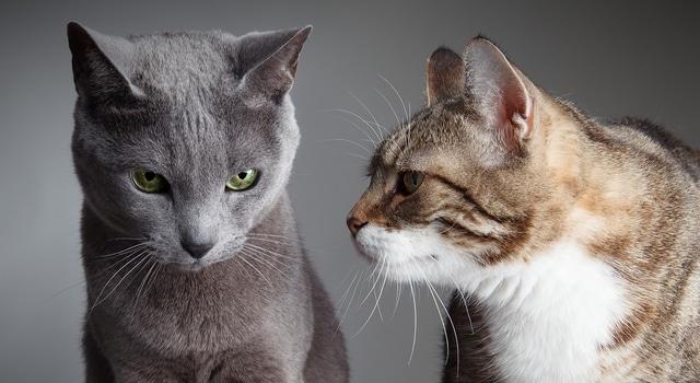 Katzen erfolgreich aneinander gewöhnen Tipps