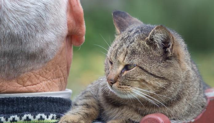 Katzenalter in Menschenjahren