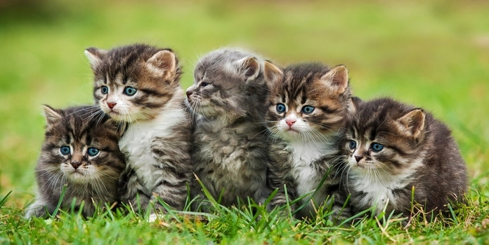 Katzenschnupfen Ansteckungsrisiko