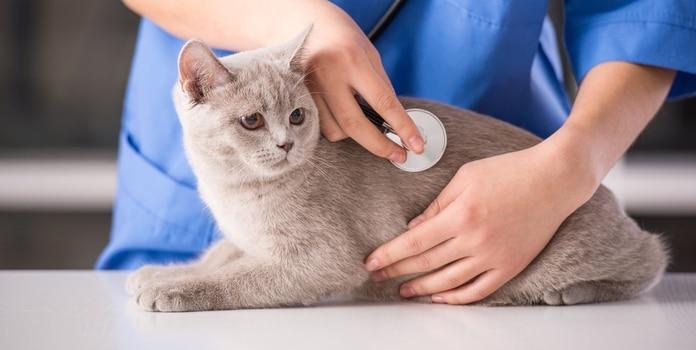 Katzenschnupfen Behandlung