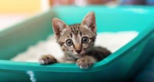 Katzenstreu-Matten