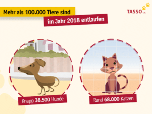 Tasso Statistik