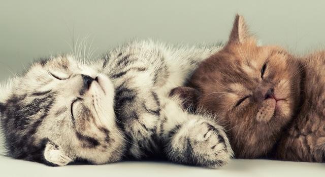 Welche Katzen passen zusammen