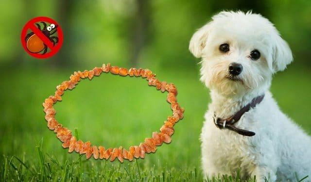 Bernsteinketten für Hunde