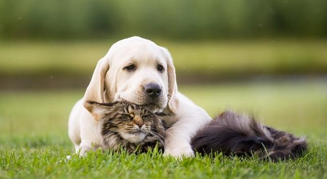 Milbemax Dosierung Hund und Katze