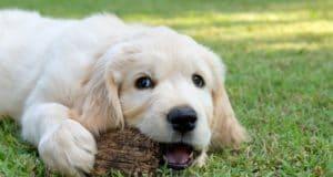 Zahnwechsel beim Hund