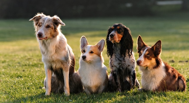 Reico Hundefutter gesund