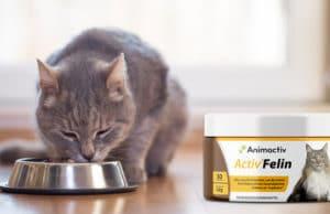 Activ Felin Nahrungsergänzung für Katzen