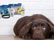 Adaptil Calm für Hunde