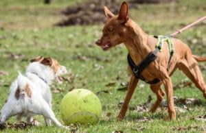 Aggressiver Hund Gründe und Maßnahmen
