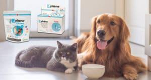 Zylkene Beruhigungsmittel für Katzen und Hunde